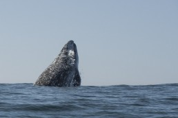 Whales Tail Charters | Photo Gallery